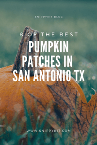 The Ultimate List of Pumpkin Patches in San Antonio You'll Want to Visit this Fall